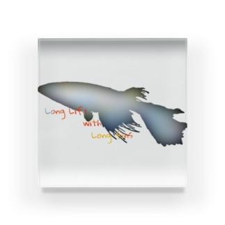 """""""@""""長いヒレの長い生活(メダカ) Acrylic Block"""