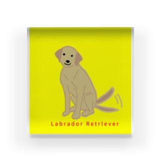 ラブラドールレトリバー 尻尾ぶんぶん 黄色バージョン Acrylic Block