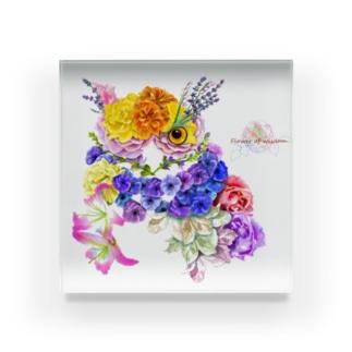 花フクロウ Acrylic Block