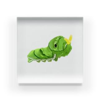 ナミアゲハの幼虫 Acrylic Block