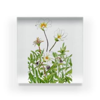 花咲く小径①いろどり Acrylic Block