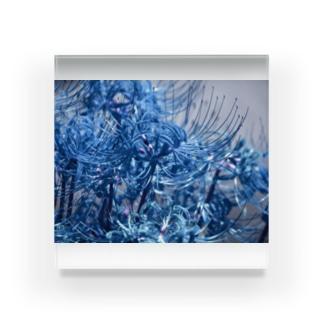 青い彼岸花 Acrylic Block
