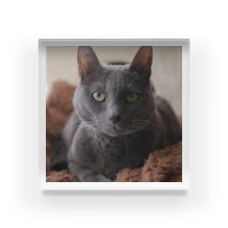 #48 Relaxing Cat. Acrylic Block