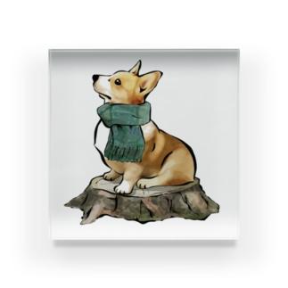 マフラー犬 コーギー Acrylic Block