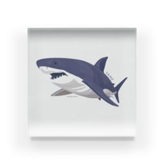 線を重ねて立体感を出したサメ Acrylic Block