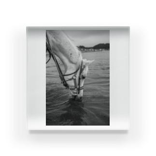 白い馬 ビーチ 白黒写真 Acrylic Block