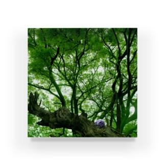 森の精霊 Acrylic Block