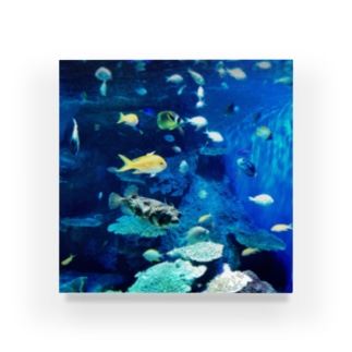 おさかなBlue Acrylic Block
