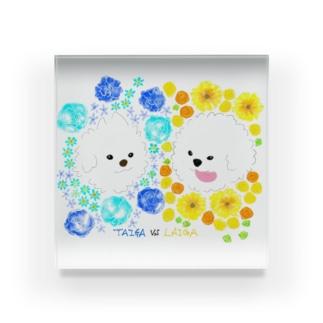taiga_vs_laigaの虎牙vs獅子牙 花手水 Acrylic Block