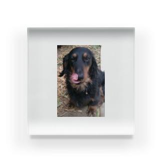 dog Acrylic Block