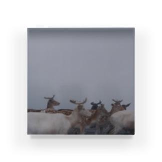 Fog and deer Ⅰ Acrylic Block