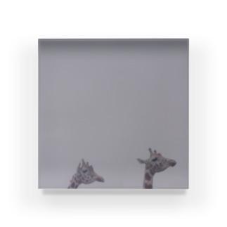 Fog and giraffe Acrylic Block