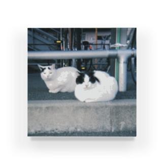 駅の駐輪場のネコちゃん Acrylic Block