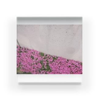 daniel cushion april Acrylic Block