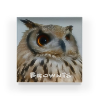 this is brownie アクリルブロック