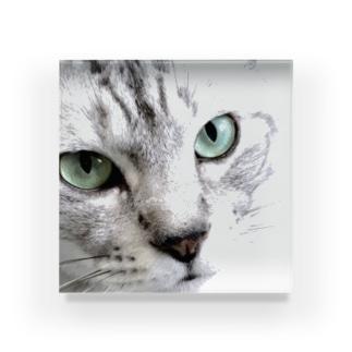 CAT FACE JOKI Acrylic Block