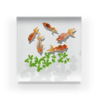 金魚のペーパーウエイト Acrylic Block