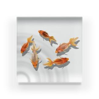 金魚のアクリル板(波紋) Acrylic Block