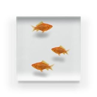 金魚3尾 Acrylic Block