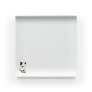 たぬきちゃん♪ Acrylic Block