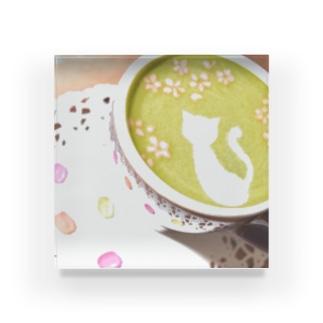 【ラテアート】桜と白猫の抹茶ラテアート Acrylic Block