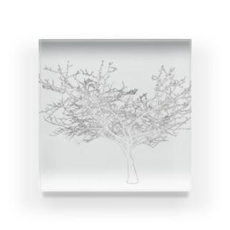 (白抜き)シルエットな木 Acrylic Block