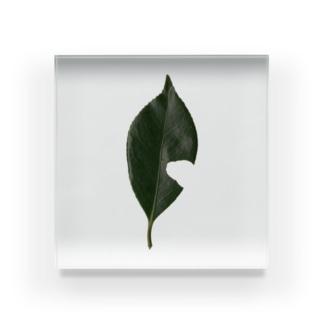 葉形 Acrylic Block