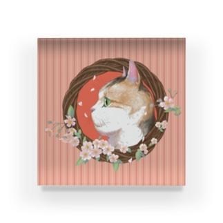 桜と三毛猫  Acrylic Block