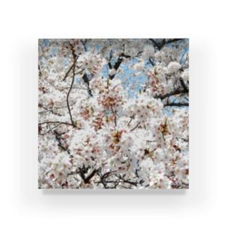 cherryblossoms3_aR Acrylic Block