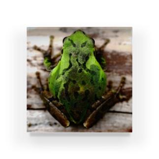 庭にカエルが来たよ。 Acrylic Block