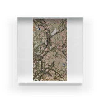 伊藤若冲 《桃花小禽図》 Acrylic Block