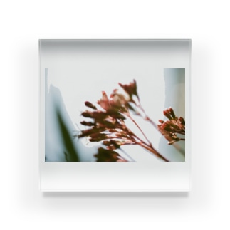 フィルムカメラの記憶 Acrylic Block