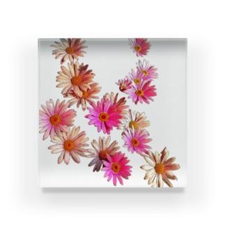 花はな Acrylic Block