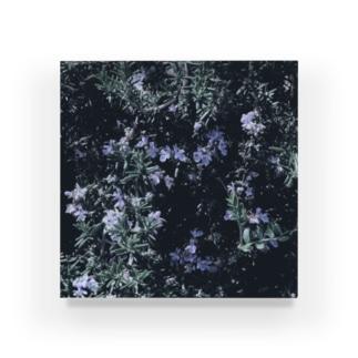 ローズマリーの花 Acrylic Block