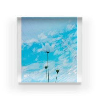 青空とコスモス Acrylic Block