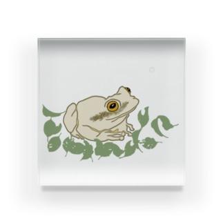 白いカエルと葉っぱ Acrylic Block