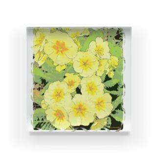 プリムラ・イエロー (Primula Yellow) Acrylic Block