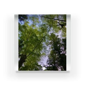 新緑の隙間 Acrylic Block