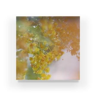 mimosa Acrylic Block