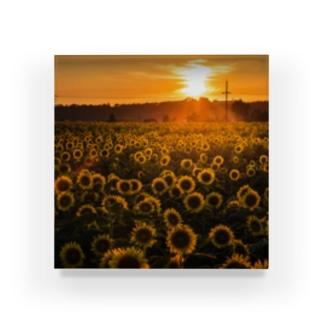 ひまわり畑の夕暮れ Acrylic Block