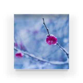 雪と紅梅 Acrylic Block