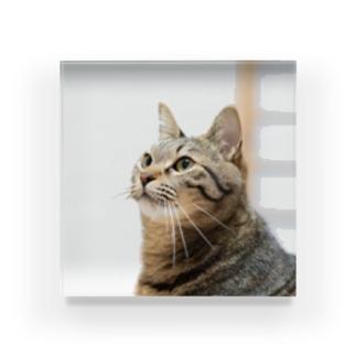 キジトラ猫 Acrylic Block