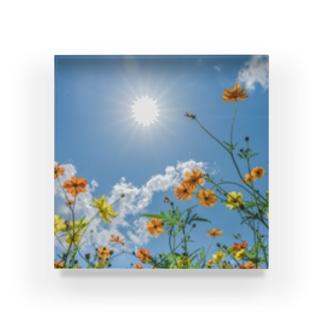 コスモスと太陽 Acrylic Block