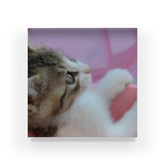 見上げる子猫 Acrylic Block