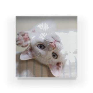 招き猫 珀ちゃん Acrylic Block