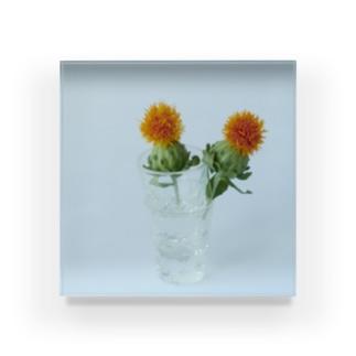 紅花 Acrylic Block