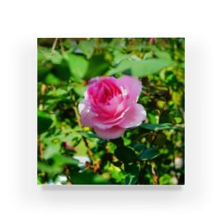 恥ずかしがり屋の薔薇 Acrylic Block