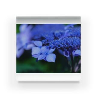 濃い色紫陽花 Acrylic Block