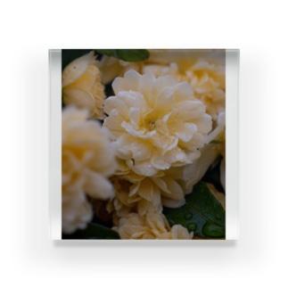 Rose 2 Acrylic Block