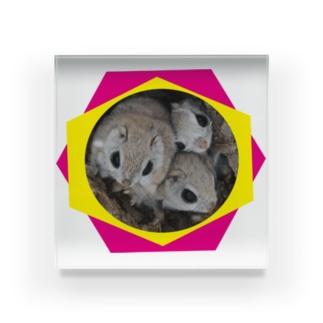 【にこらび】毎日を特別にするエゾモモンガンN◇202106 Acrylic Block
